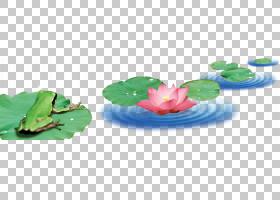 荷叶,塑料,项目,莲花效应,叶,莲子,青蛙,图片