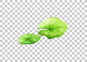 绿叶背景,一年生植物,绿色,植物,花瓣,莲花效应,莲子,叶,