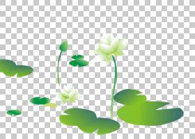 绿草背景,草,植物茎,绿色,花,替代医学,植物群,植物,计算机图形学