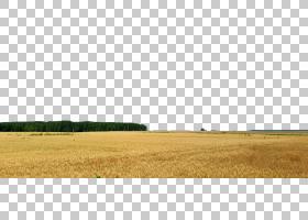 家庭卡通,农业,草,草原,场,植物,草甸,草族,家庭,生态区,天空,草,图片