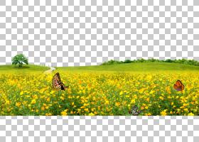 绿草背景,草,平淡,树,生态系统,芥菜植物,农场,草族,白菜型油菜,图片