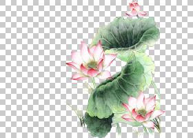 粉红色花卡通,草本植物,一年生植物,插花,花卉,花盆,植物,花瓣,人