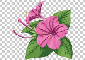 粉红色花卡通,草本植物,一年生植物,洋红色,种子植物,花卉设计,梅