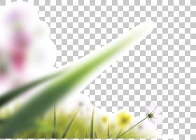 绿草背景,线路,草,关门,绿色,字体,黄色,植物群,植物,植物茎,花瓣