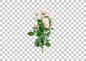 粉红色花卡通,人造花,种子植物,植物茎,花盆,花卉,蔷薇,插花,玫瑰