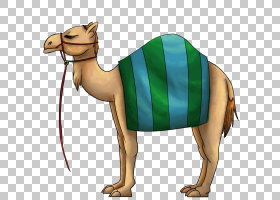 珍珠背景,动物形象,颈部,家畜,口吻,阿拉伯骆驼,骆驼状哺乳动物,图片