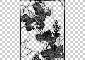黑白花,机翼,传粉者,植物群,视觉艺术,花卉设计,线路,木本植物,植