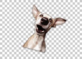 卡通狗,狗,繁殖,口吻,阿凡达,动物,灰狗,Wippet,意大利灰狗,图片