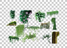 花卉背景,花卉设计,草,草药,文本,绿色,常春藤,生态系统,叶,植物图片