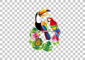 鸟鹦鹉,羽毛,喙,徽标,热带雨林,金刚鹦鹉,巨嘴鸟,鸟,鹦鹉,图片