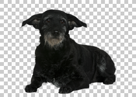 宠物狗犬科动物免扣素材图片