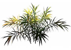 枯黄的蕨类植物免扣素材