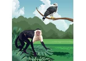 树林中玩耍的猴子