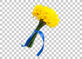 花背景功能区,花卉,插花,雏菊家庭,非洲菊,花瓣,向日葵,黛西,植物