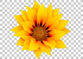 Motif背景,雏菊家庭,黄色,花瓣,向日葵,关门,花粉,葵花籽,主题,向