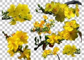 新年树枝,开花,灌木,细枝,植物,树,春天,分支,植物群,花,黄色,符