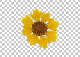 披萨艺术,野花,扁桃籽,雏菊家庭,金盏花,花粉,非洲菊,英国万寿菊,