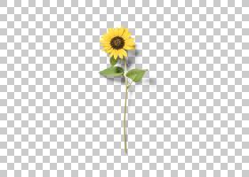 花卉剪贴画背景,雏菊家庭,花盆,花瓣,向日葵,植物,向日葵黄,切花,