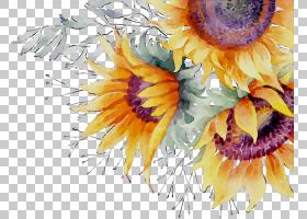 花卉剪贴画背景,静物,紫菀,雏菊家庭,野花,非洲菊,花瓣,植物,水彩