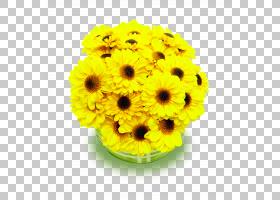 花卉剪贴画背景,非洲菊,切花,花卉设计,黄色,花卉,雏菊家庭,花盆,