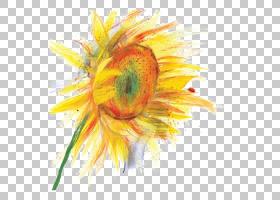 族的图形,切花,雏菊家庭,花瓣,葵花籽,植物,水彩画,花,黄色,向日
