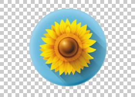族的图形,圆,花粉,雏菊家庭,花,黄色,花瓣,向日葵,眼睛,关门,虹膜