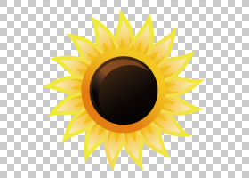 族的图形,圆,雏菊家庭,花,向日葵,眼睛,关门,葵花籽,黄色,传单,红