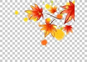 红枫树,花卉设计,线路,橙色,分支,花,黄色,树,花瓣,植物群,植物,