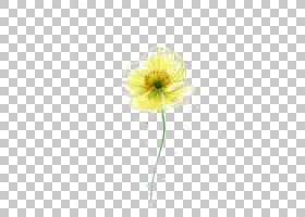 花卉剪贴画背景,非洲菊,植物茎,雏菊家庭,花瓣,花,黄色,切花,菊花