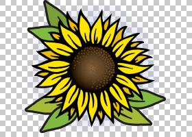 族的图形,线路,花瓣,雏菊家庭,黄色,圆,切花,向日葵,对称性,植物