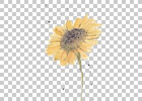 花卉剪贴画背景,非洲菊,牛眼雏菊,黛西,雏菊家庭,植物群,花卉设计