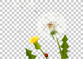 背景花,野花,植物茎,叶,植物群,花粉,原住民,植物,引进种,花瓣,花