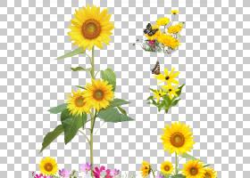 族的图形,花卉,一年生植物,插花,切花,雏菊家庭,花卉设计,黄色,黛