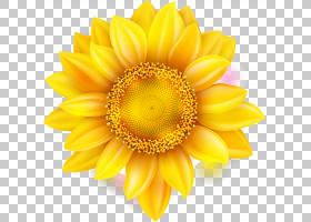 花卉剪贴画背景,非洲菊,葵花籽,大丽花,切花,关门,雏菊家庭,花瓣,