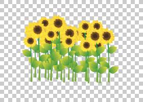 族的图形,花卉,插花,黄色,素食,花卉设计,雏菊家庭,花盆,花瓣,向