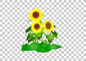 族的图形,花卉,插花,黄色,非洲菊,花卉设计,雏菊家庭,花瓣,向日葵