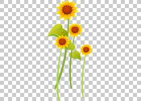 族的图形,花卉,牛眼雏菊,植物茎,黛西,雏菊家庭,切花,花卉设计,黄