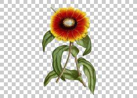 花卉背景,花卉,花束,一年生植物,插花,切花,花卉设计,非洲菊,雏菊