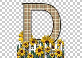 背景花框架,花卉设计,切花,雏菊家庭,黄色,向日葵,植物群,植物,葵