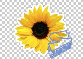 婚礼花卉背景,切花,花瓣,雏菊家庭,黄色,向日葵,向日葵,礼物,婚礼