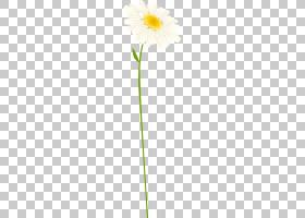 花卉剪贴画背景,非洲菊,黛西,雏菊家庭,黄色,植物群,植物,2017年,