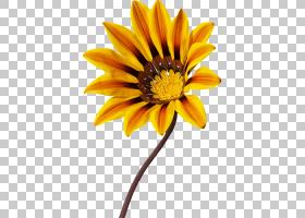 花卉剪贴画背景,非洲菊,黛西,黄色,切花,花瓣,向日葵,植物群,植物