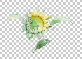 族的图形,花卉设计,插花,雏菊家庭,花,黄色,切花,花瓣,向日葵,植