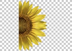 婚礼花卉背景,种子,雏菊家庭,花,黄色,花瓣,向日葵,关门,葵花籽,