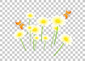花卉背景,花卉,草,黛西,植物群,线路,大丽花,雏菊家庭,植物,植物