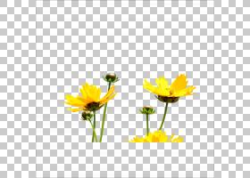 花卉背景,花卉,金盏花,黛西,雏菊家庭,花卉设计,向日葵,植物群,植