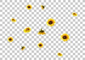 族的图形,野花,星形目,花瓣,洋甘菊,花粉,植物,向日葵,花,黄色,向