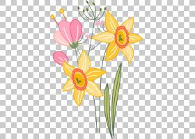 花卉背景,花卉,黛西,插花,花瓣,植物群,植物,蓝色,切花,花,花束,