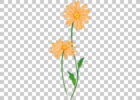 花卉背景,花卉,黛西,植物群,花卉设计,线路,大丽花,雏菊家庭,植物