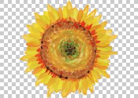 族的图形,雏菊家庭,黄色,花瓣,关门,花粉,葵花籽,花,刷子,墨水,画